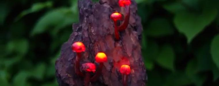 چراغخواب-شبچراغ-روشنایی-دکوری-قارچ-جادویی
