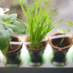 آموزش-آبیاری-قطره-ای-گیاه-درخت